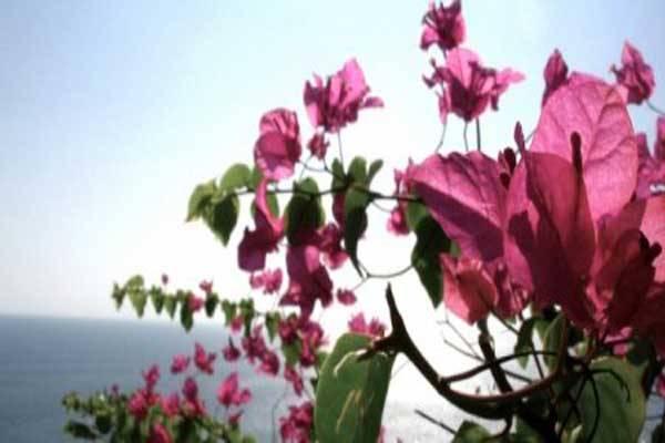 Perspektive uzgoja cveća i ukrasnog bilja