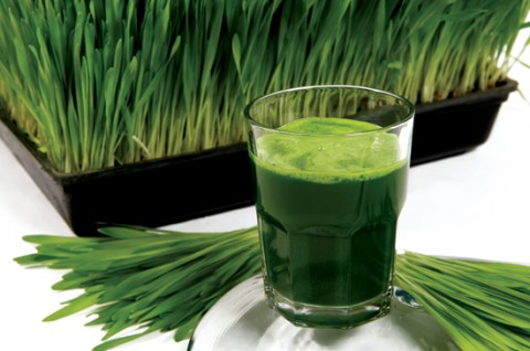 Wheatgrass_Glass_web-480x318